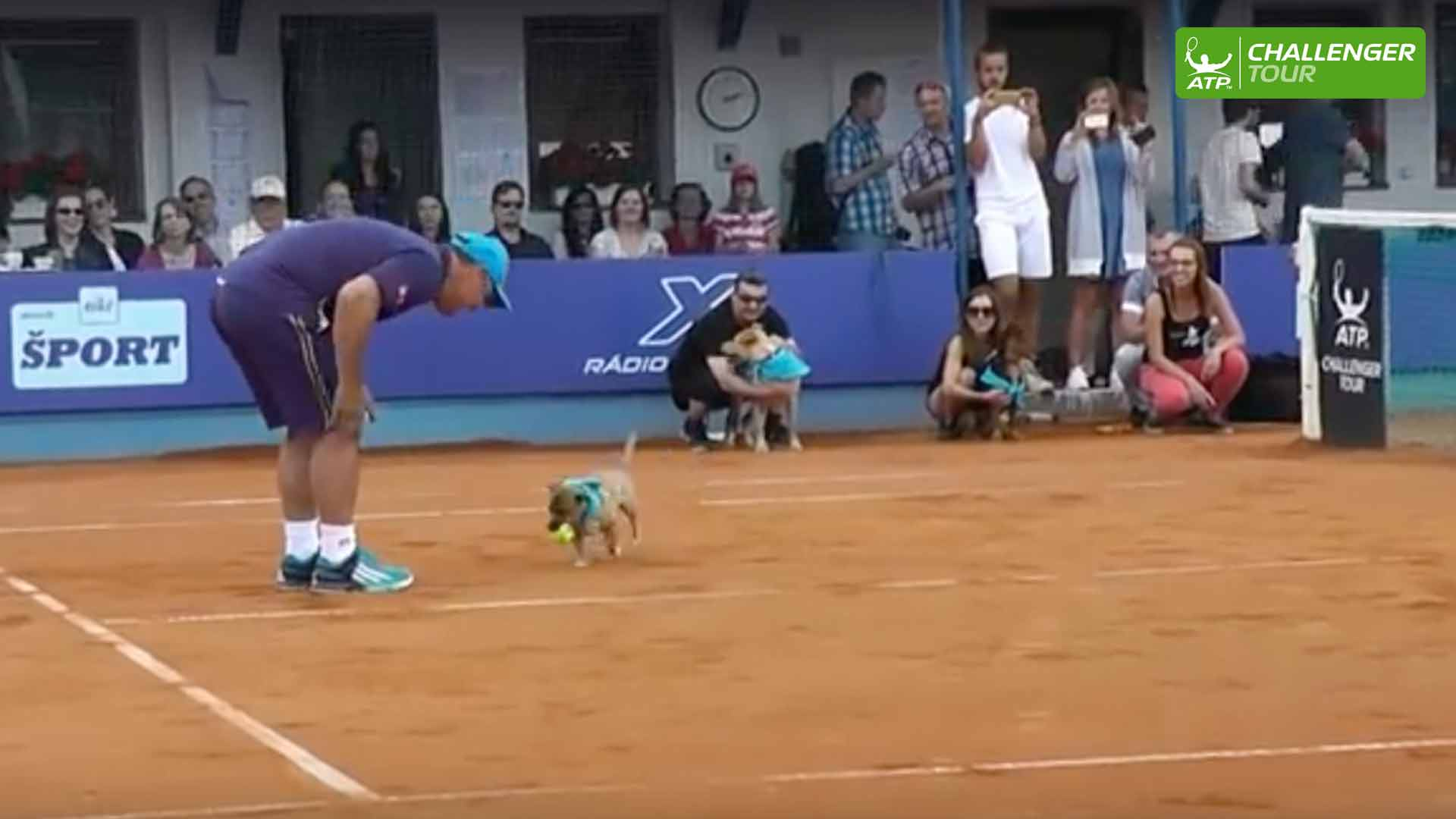 The dogs steal the show at the ATP Challenger Tour event in Poprad Tatry.