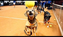 Six 'ball dogs' showcased their skills at the Brasil Open on Saturday. It is the third year in a row that 'ball dogs' have made an appearance in Sao Paulo.