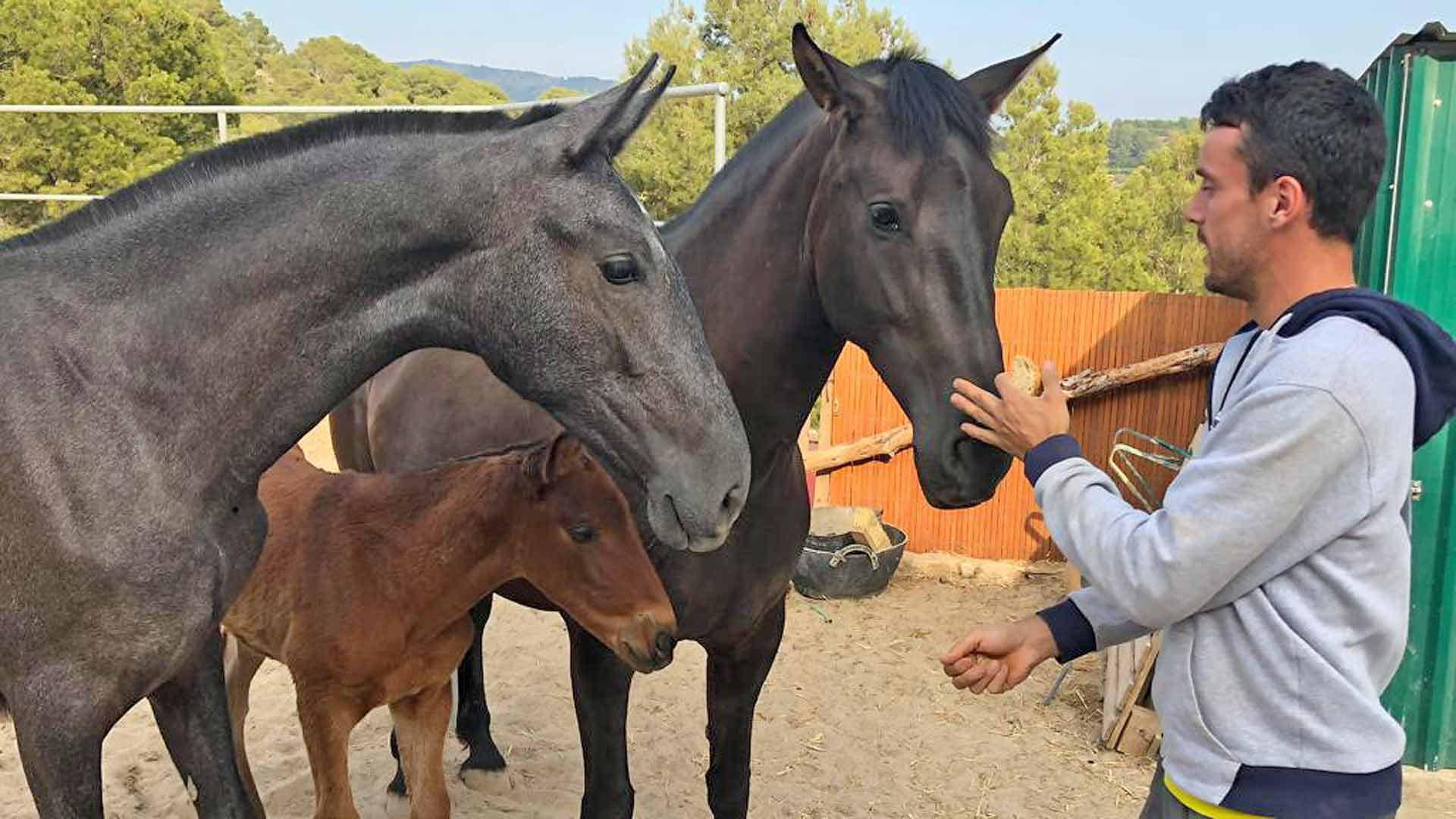 Roberto Bautista Agut and some of his horses